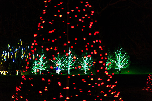 Colored light show in gardens at holiday time.
